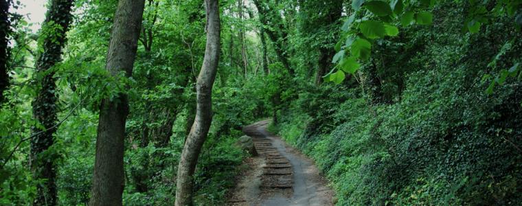 COACHING ENP : Environnement Nature Patrimoine – Découverte de soi grâce à la nature et le patrimoine.